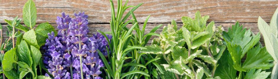 aromatherapy herb garden