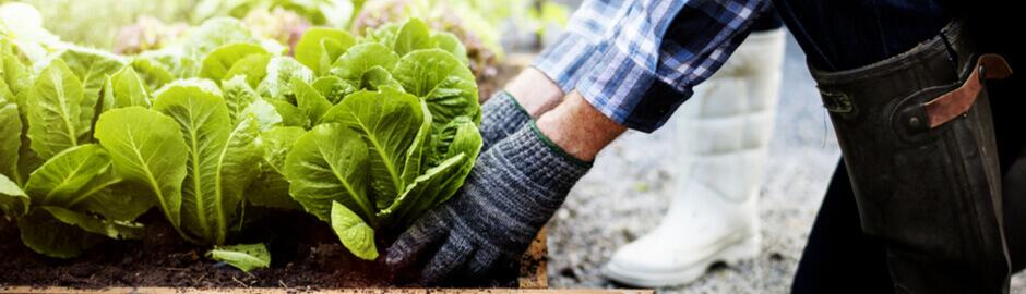 gardening benefits for arthritis