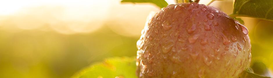 Apples Anti-Inflammatory Diet
