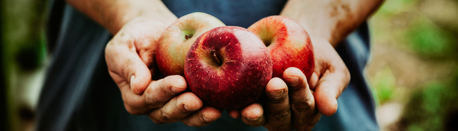 organic fruits vegetables