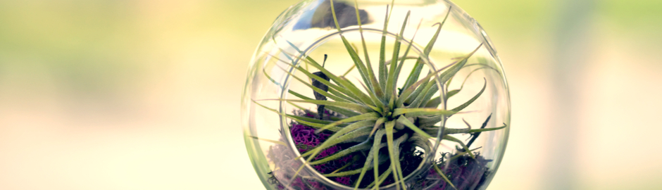 air plants gardening with arthritis